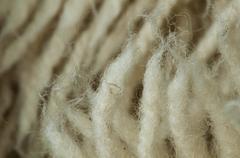 Wool fibers Stock Photos