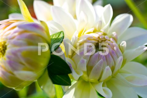 Stock photo of Flowers