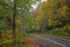 Autumn view roadside - stock photo