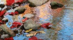 Autumn Stream Stock Footage