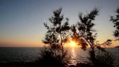 Sun through the windy trees Stock Footage