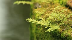 Moss Stock Footage