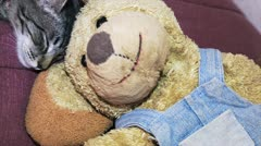 Cat and Teddy bear Stock Footage