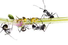 insect ant - stock photo