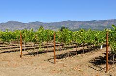 Napa valley california vineyard travel destination Stock Photos