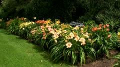 Daylily garden - stock footage