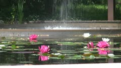 Flume fountain waterfall lotus flowers; 3 - stock footage