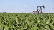 Oil Pump Jack in a Corn Field Stock Footage