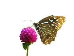 Summer butterfly on flower Stock Photos