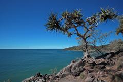 Tropical tree coastal scene Stock Photos