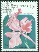 stamp printed in Laos shows flower, series, circa 1987 - stock photo