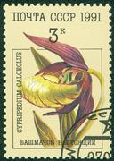 Stamp printed by USSR, shows flower Orchids, circa 1991 Stock Photos