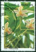 Stamp printed in Sao Tome and Principe shows image of flower, circa 1996 Stock Photos