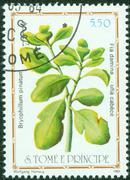 post stamp - stock photo