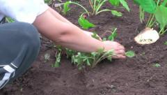 garden work - stock footage