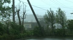 Power Lines Trees Thrash In Hurricane Winds Stock Footage