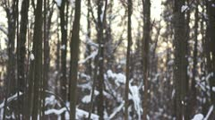 Trees in sunny winter park Stock Footage