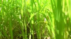 Walk Through Overgrown Field Stock Footage
