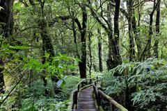 Beautiful rain forest at doi inthanon national park, chiang mai, thailand Stock Photos