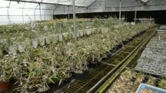 Plant green house orchid flower nursery Stock Footage