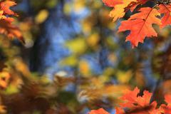 Leaf background in autumn Stock Photos
