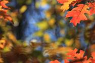 Leaf background in autumn Stock Photos
