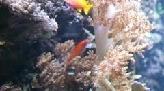 Underwater world Stock Footage