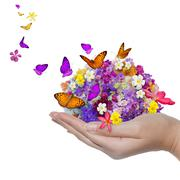 Hand holds flower spill many flowers and butterfly Stock Illustration