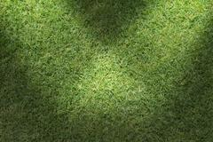 Stock Illustration of beautiful green grass texture with sun beam