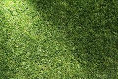 Stock Illustration of beautiful green grass texture with sun beam