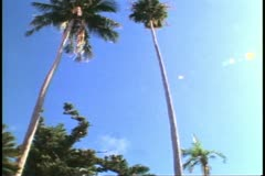 Palm Garden, St. George, Bermuda, wide shot tilt down Stock Footage
