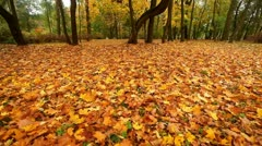 Autumn in a park - stock footage