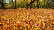 Stock Video Footage of Autumn in a park