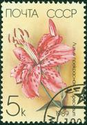 stamp printed in the USSR shows a Japanese Lily - stock photo