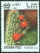 Stamp printed in the Afghan, shows cactus Stock Photos