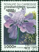 stamp printed in Cambodia shows flower - stock photo