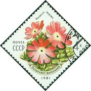 stamp printed by the Soviet Union Post shows a least primrose - stock photo