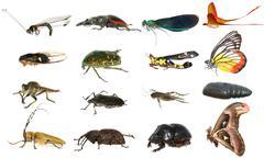 Villieläin hyönteinen set kokoelma Kuvituskuvat