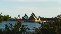 Sydney opera house and red native flowers Stock Footage