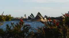 Sydney opera house and callistemon Stock Footage