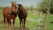 Romanian farmers with horses 3 Stock Footage