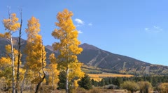 Fall Colors Blue Sky Stock Footage