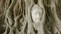 Buddha head in tree roots Thailand Stock Footage