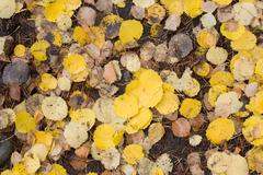 Stock Photo of yellow leaves