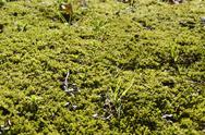 Natural green moss background Stock Photos