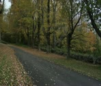 Road with trees and rockwall in autumn Stock Footage