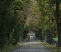 Car Traveling on tree lined road in fall - stock footage