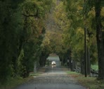 Car Traveling on tree lined road in fall Stock Footage