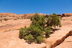 arches national park in utah - stock photo