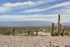 Views of RUINAS DE QUILMES whit cactus- Argentina - stock photo